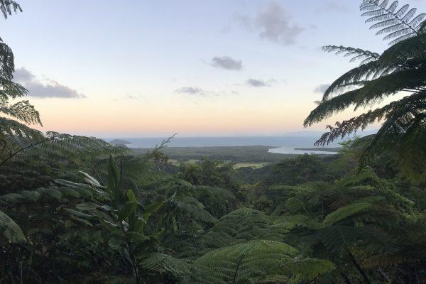 Rainforest trips Cairns Daintree Kuranda