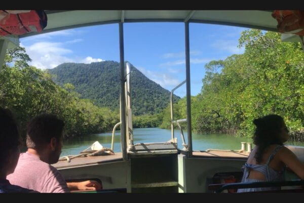 River cruises on the Daintree rainforest Daintree River