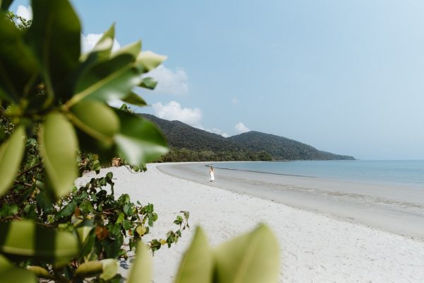 Daintree rainforest Cape tribulation Tours and attractions northern Queensland Australia