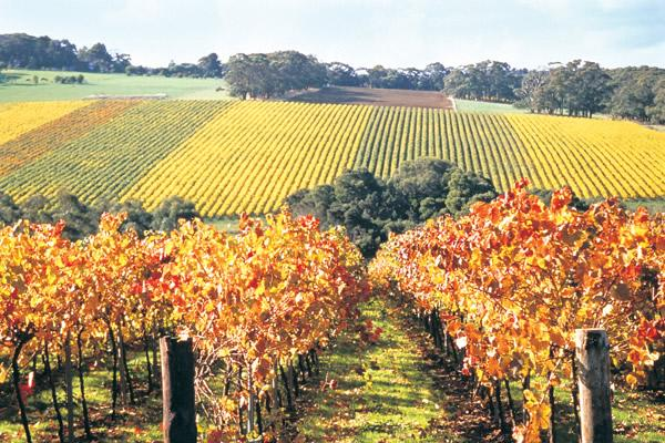 mornington-peninsula-winery-1560