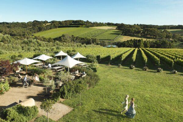 winery tour Mornington Peninsula