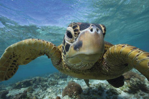 Great Barrier Reef Australian Tours Holidays