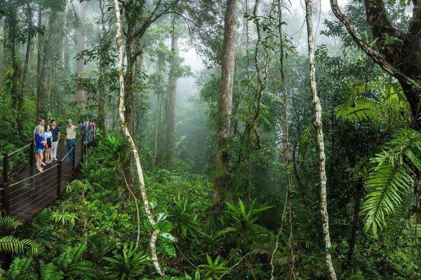 Rainforest tours Kuranda