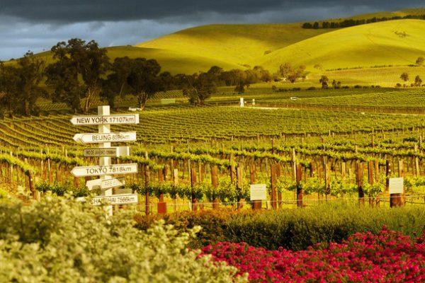 South Australian wine tours