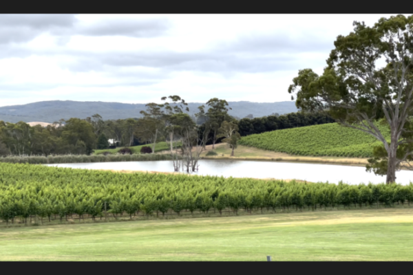 Best wine tours Adelaide Hills