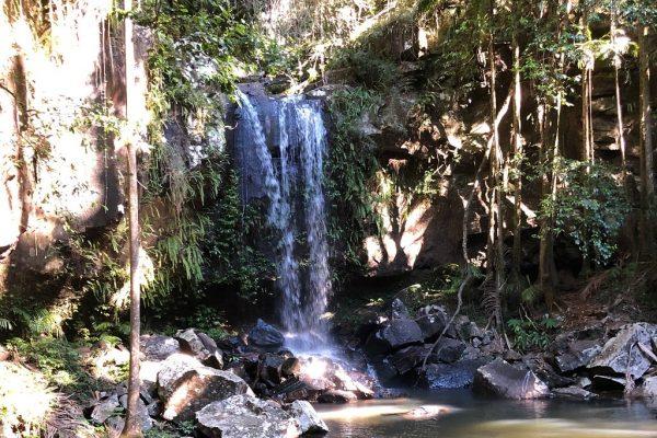 Rainforest Tour Queensland